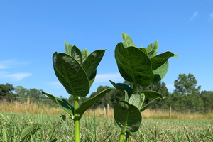 Regrow milkweed for monarchs: A citizen science study