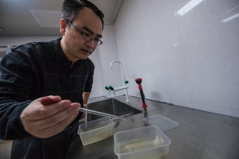 Zhiyong Xi transfers mosquito larvae with a pipette. Photo by Kurt Stepnitz