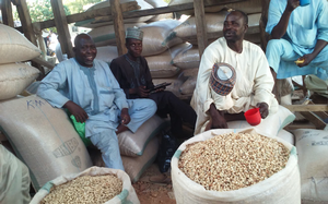 Researchers to Study Legume Value Chains in West Africa