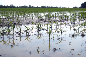 Evaluating flood-damaged crops – Part 2
