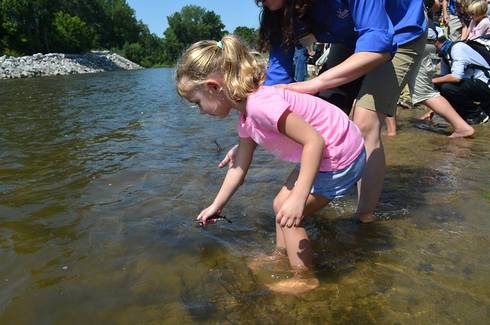 Young child helps to release juvenile sturgeon into the Cass River during a 2019 event. Photo: MIchigan Sea Grant