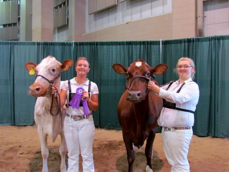 Jessie Nash with her senior champion milking shorthorn cow (left) and Mackenize DeLong with her reserve senior champion milking shorthorn cow (right) at the 2016 4-H Youth Dairy Days breed show. Photo: Sara Long.
