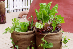 Container gardening for growing food