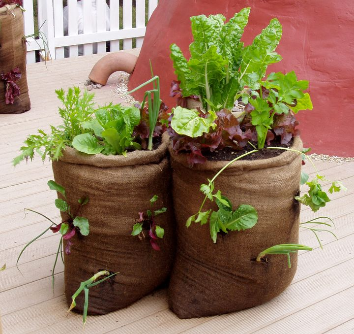 You can even grow vegetables in burlap bag containers. Photo by Rebecca Finneran, MSU Extension.