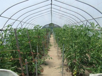 A hoophouse at the MSU Student Organic Farm. Image courtesy Katy Joe DeSantis.
