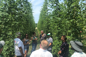 Great Lakes Hop Working Group seeks grower input