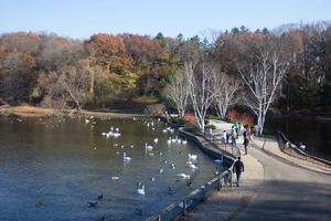Celebrate fall migration at the Bird Sanctuary