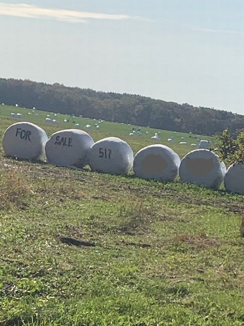 Baleage bagged up in a field