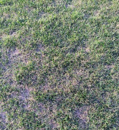 Spotty turfgrass recovery following drought.