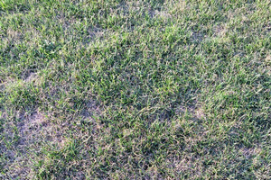 Turfgrass pests: Sod webworms, bluegrass billbugs and grubs on the horizon