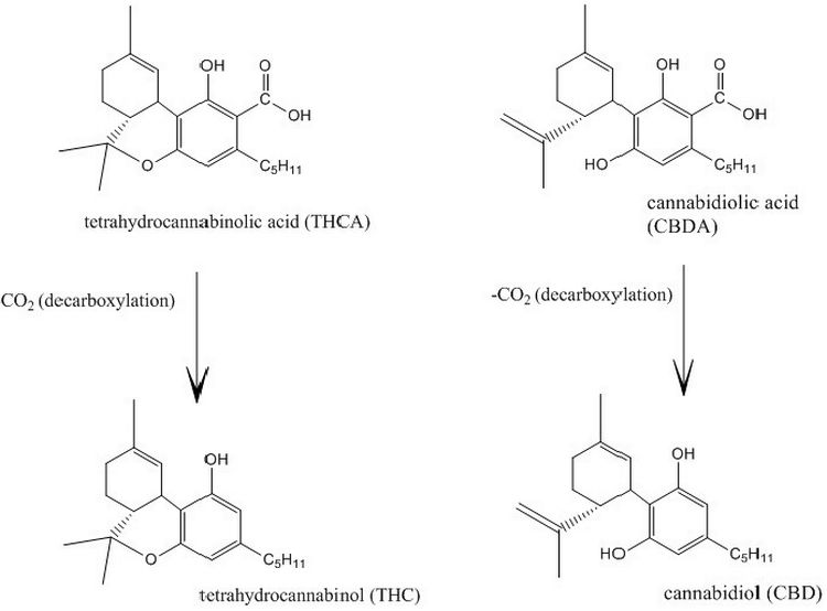Chemical structure and decarboxylation of THC and CBD