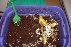 Worm composting or vermicomposting