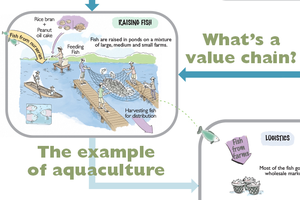 Fish Farming Value Chain in Image