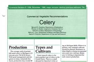 Celery: Commercial Vegetable Recommendations (E1308) - MSU