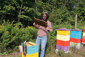 MSU Extension co-hosts Michigan Beekeepers' Association Virtual 2021 Spring Conference