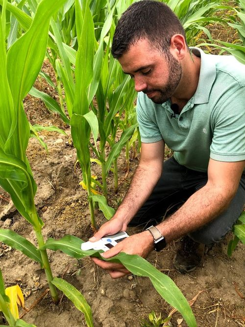 Using a chlorophyll meter