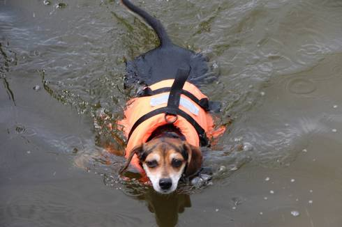 A Lake Manitou resident pet enjoys a swim in Lake Manitou. This is how the water normally looks. Photo credit: Fred Farkas