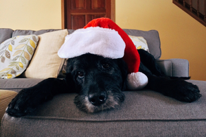 Planning ahead for your dog's holiday safety