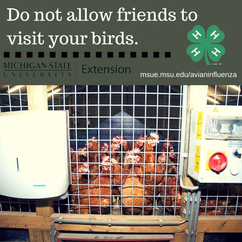 Limiting exposure to your animals is an important biosecurity tip for preventing the spread of disease. Photo credit: ANR Communications | MSU Extension