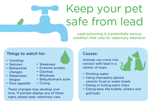 Keep Your Pets Safe From Lead