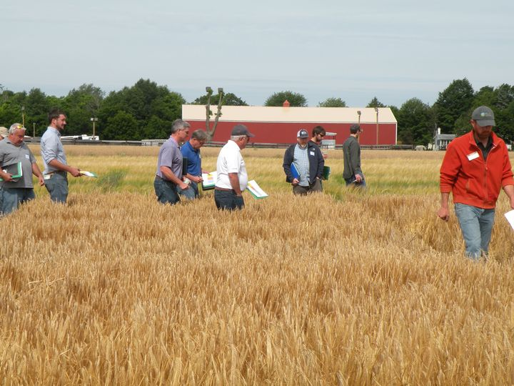 Barley field day participants tour barley variety trial plots.