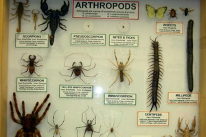 Collection of arthropods at Bug House.