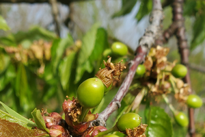 Southwest Michigan fruit update – May 11, 2021