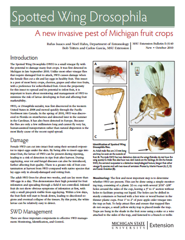 Spotted Wing Drosophila: A New Invasive Pest of Michigan