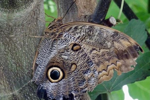 Exploring disguise and mimicry camouflage with youth
