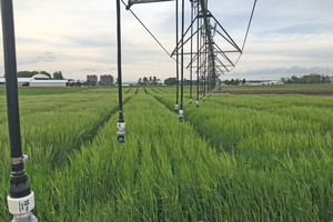Field Crops Virtual Breakfast to feature discussion on disease management with irrigation