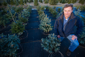 Dr. Cregg's research has focused on physiology and management of trees in nursery, Christmas tree, and landscape systems
