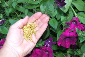 Fertilizer basics for the smart gardener
