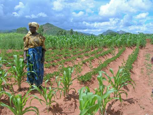 African woman in crops