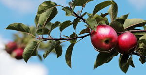 Register for the Spring 2020 MSU Tree Fruit Webinars Series