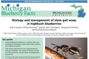 New blueberry stem gall wasp fact sheet available in English and Spanish