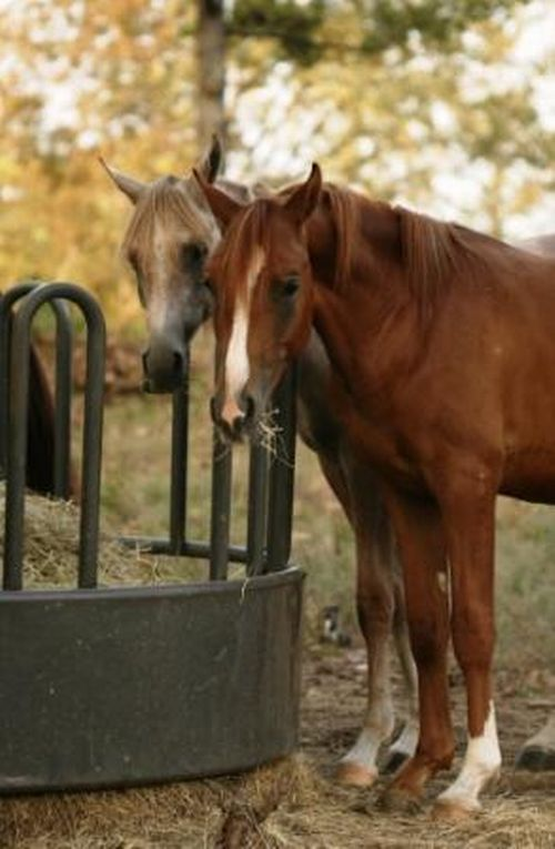 Two horses standing at the feed