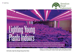 Lighting young plants indoors