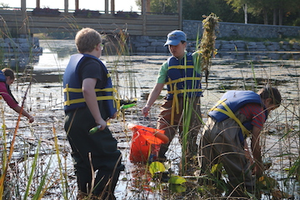 Alpena elementary students work alongside NEMIGLSI network coordinator, Meaghan Gass, to identify and remove invasive European frogbit. Photo: Michigan Sea Grant