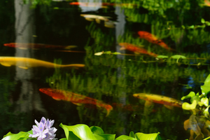 Is your water garden having a RIPPLE effect on Michigan's waterways?