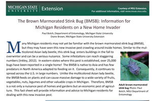 New tip sheet on brown marmorated stink bugs for homeowners