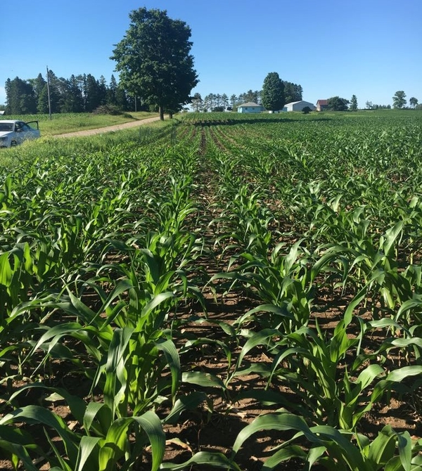 Corn hybrid trial at Pleasant View Farms in Stephenson, Michigan.