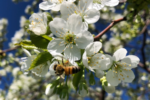 The relationship between plant disease management and pollinator conservation