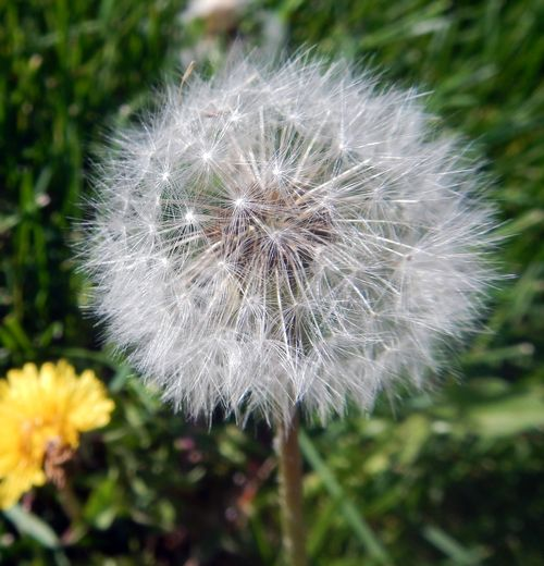 80 - How To Get Rid Of Corn Speedwell In Lawn