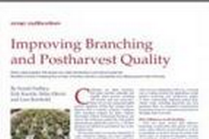 Improving branching and postharvest quality