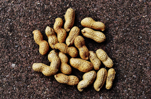 Peanuts are one of the eight most common allergens identified by the U.S. Food and Drug Administration.