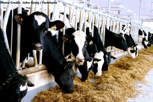 Coronavirus Food Assistance Program (CFAP) for dairy farmers
