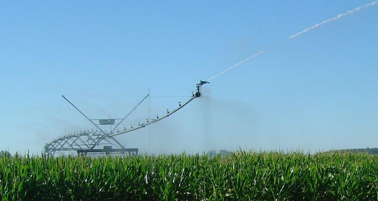 Irrigated corn