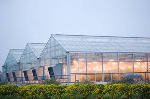 Greenhouses with their interior lighting are popular.