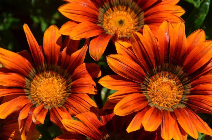 Plan Now For A Beautiful Flower Cutting Garden Msu Extension