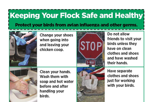 Poultry producers can reduce the risk of avian influenza by implementing biosecurity tips such as these. Photo credit: ANR Communications | MSU Extension